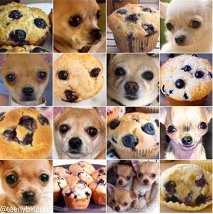 blueberry muffin or chihuahua